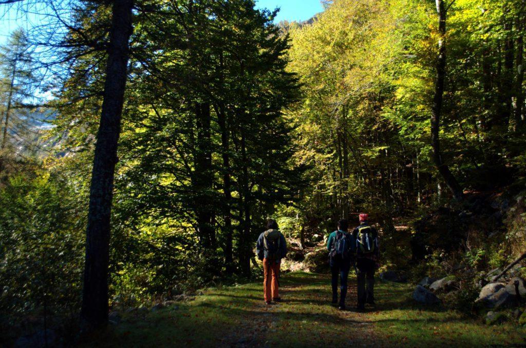 Il gruppo attraversa i bei boschetti della parte bassa del nostro percorso