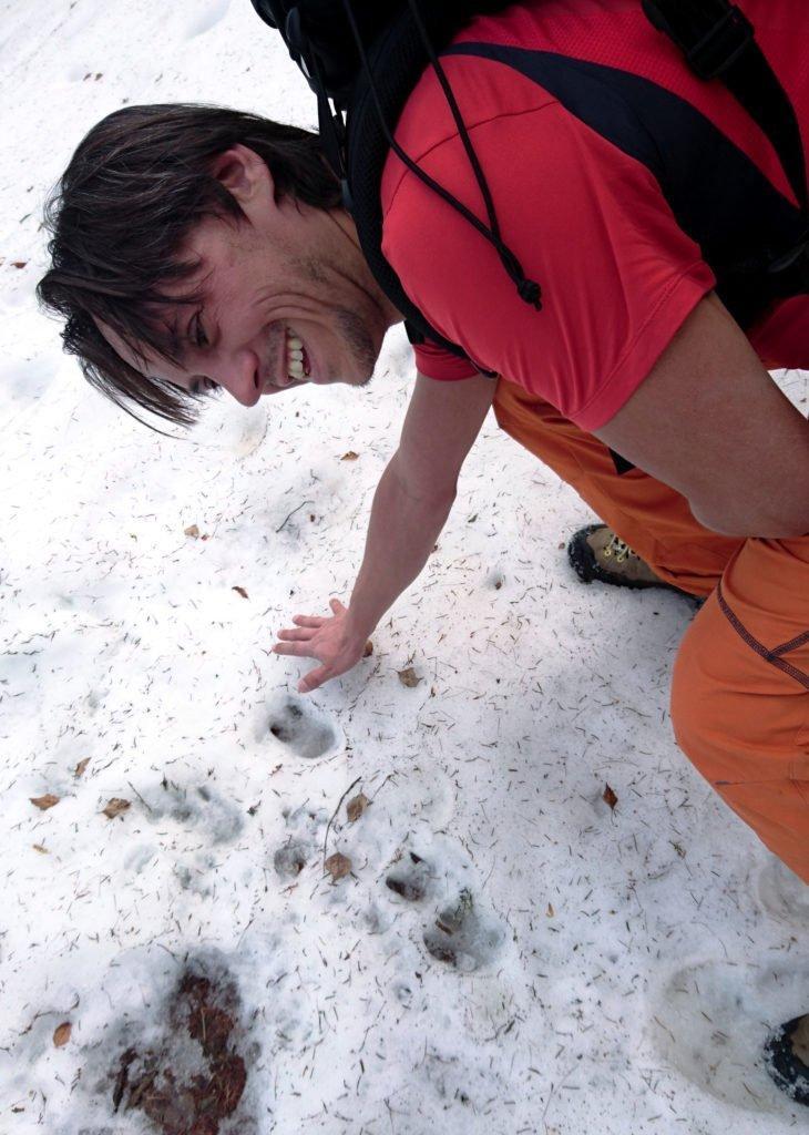 lungo il sentiero incontriamo parecchie orme nella neve