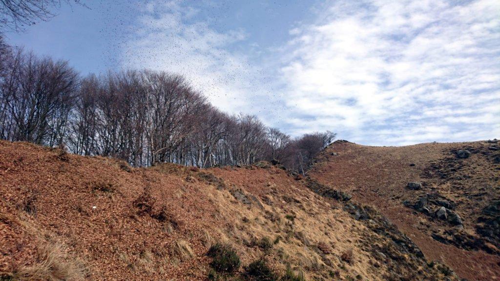 in vista della Colma del Vercio il vento solleva mulinelli di foglie, che danzano per noi