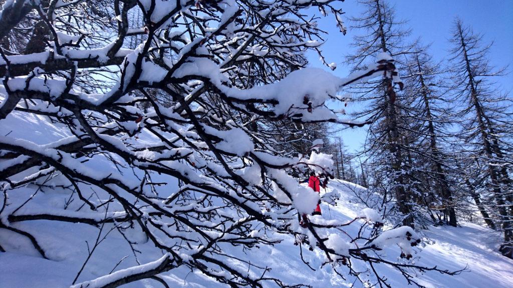 Dettagli di bosco innevato.....goduria per noi.....anche se l'inverno quest'anno ci sta facendo patire più del solito