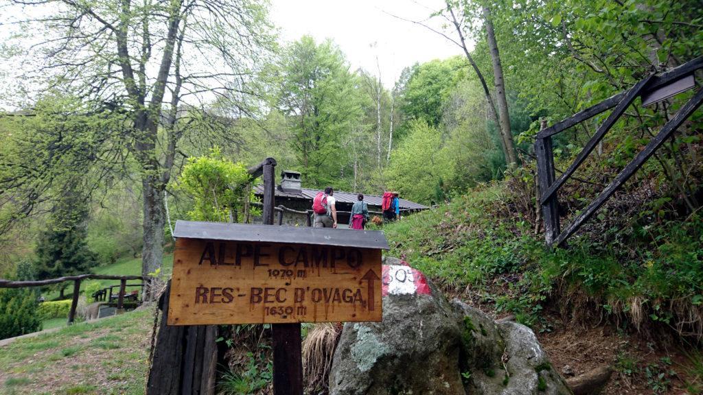 Via che si parte! All'inizio si segue la strada sterrata ma giunti all'alpe Campo si inizia a salire per un bel sentiero nel bosco
