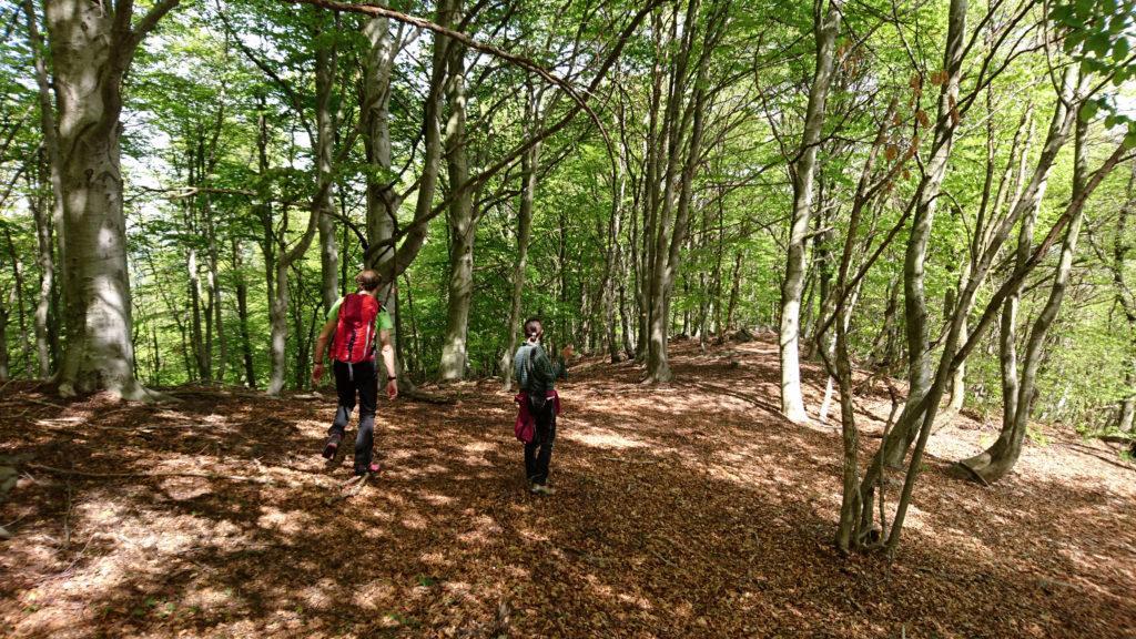 il cuggi e la cuggi in discesa nel bellissimo bosco di faggi che visiteremo facendo l'anello di discesa