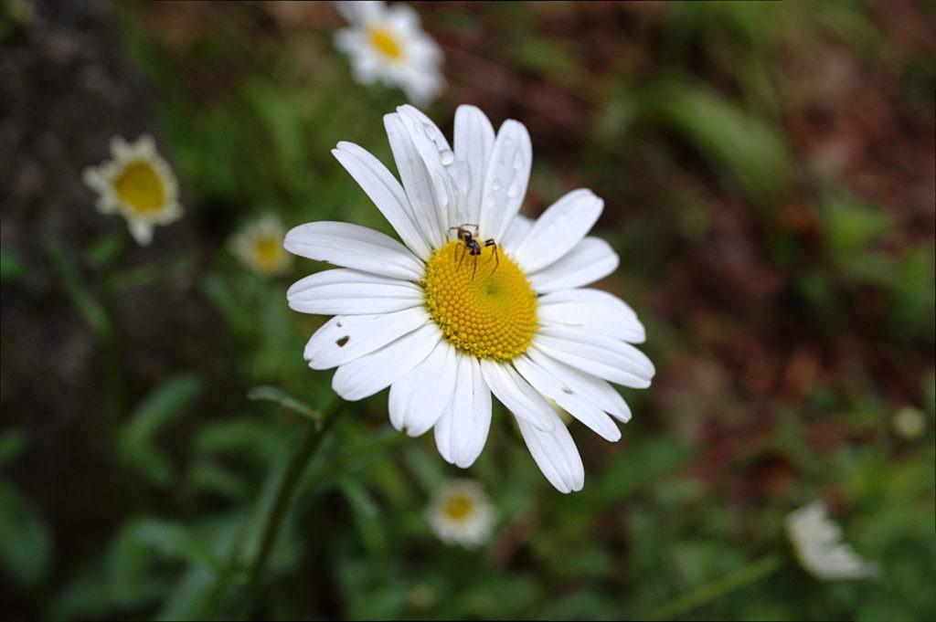 Flora e fauna dell'alpe Casavei in una splendida macro