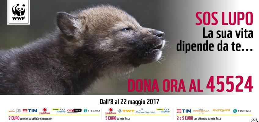 """SOS LUPO: a lanciarlo è il WWF – Perché si fa presto a dire """"al lupo!"""""""