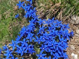 Altri bei fiori lungo la strada del ritorno