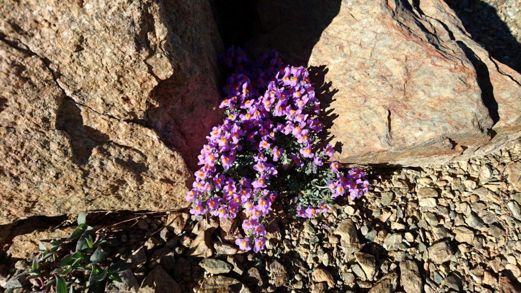 Non so i nomi dei fiori, ma questi erano proprio carini