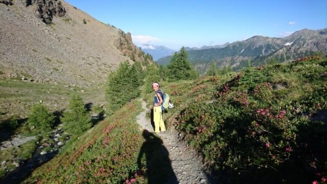 Il sentiero di discesa passa in mezzo ai rododendri in fiore