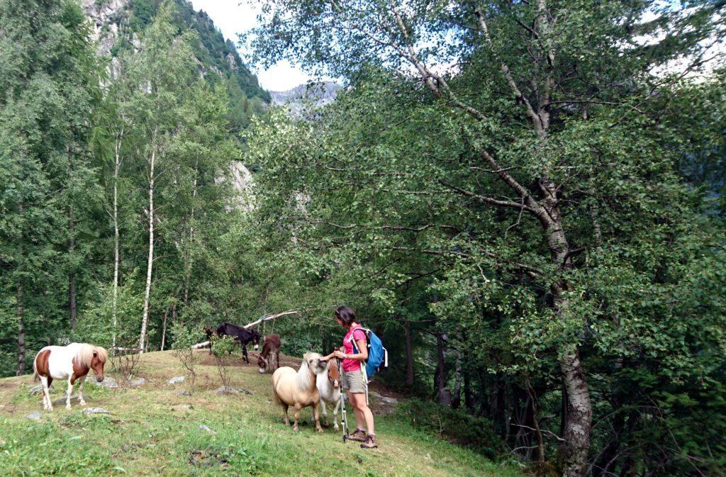 Erica in brodo di giuggiole tra gli asini e i cavallini in festa per il nostro arrivo