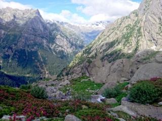 scorcio della valle dell'Oro con i rododendri in fiore ed i massoni giganti che la contraddistinguono