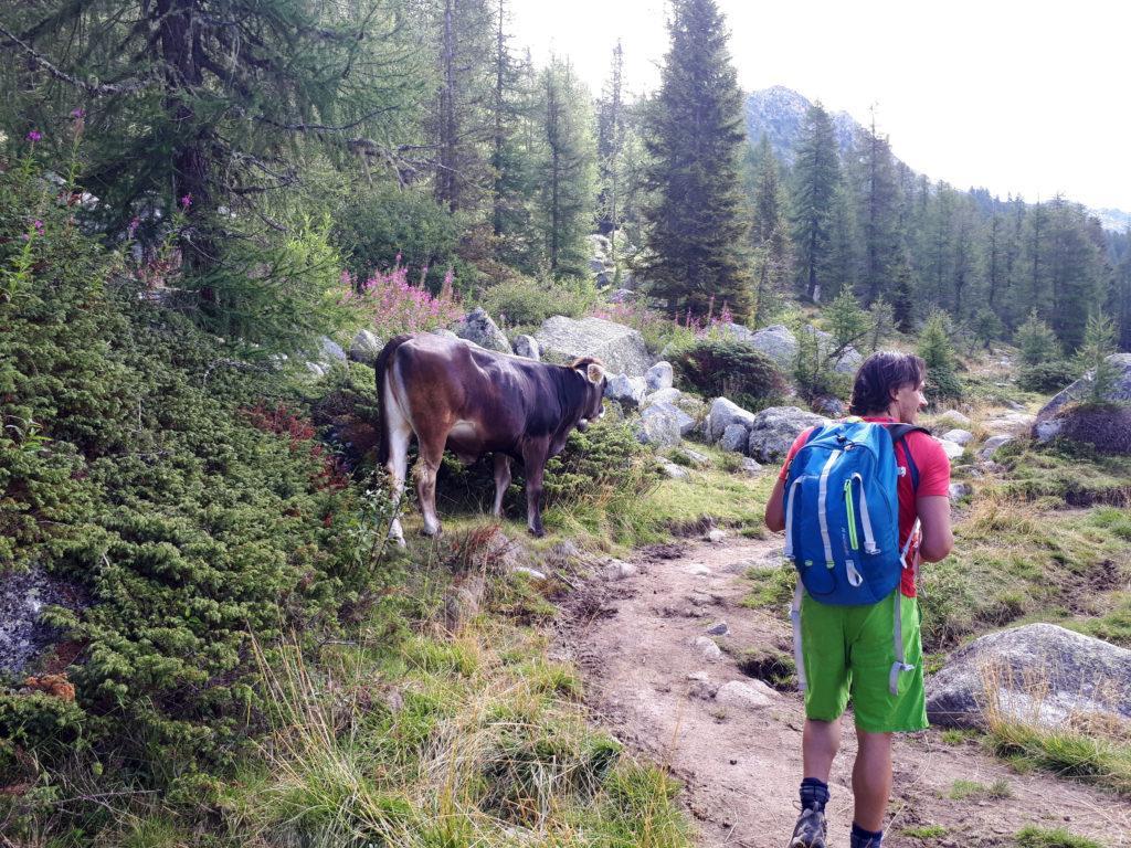 Io e le mucche attorno al lago