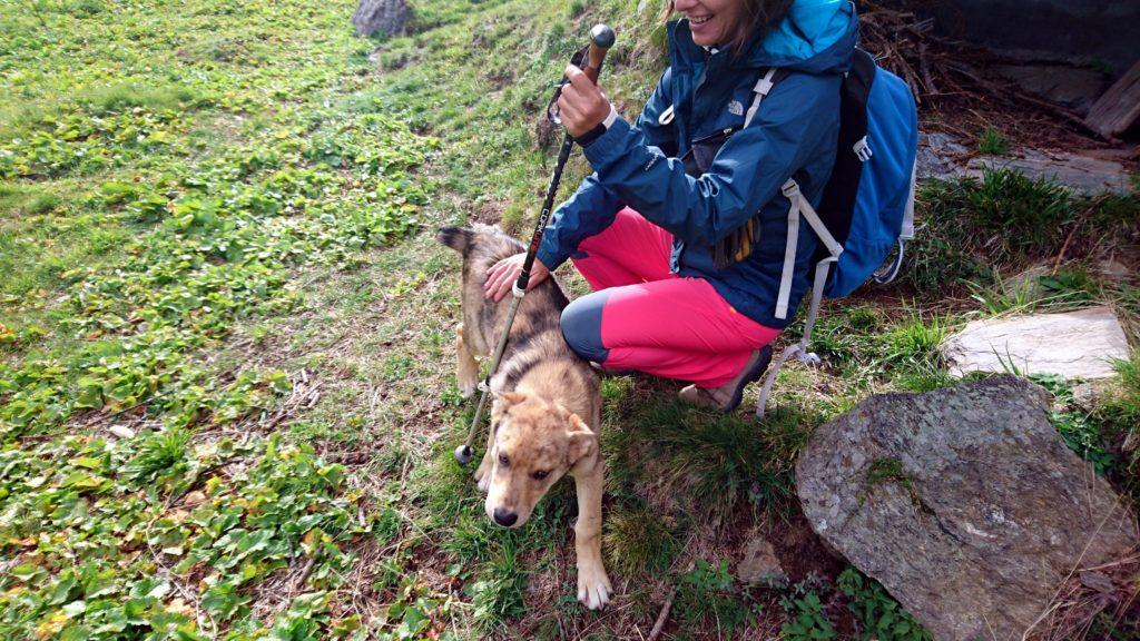 all'Alpe Veglia troviamo nuovi amici