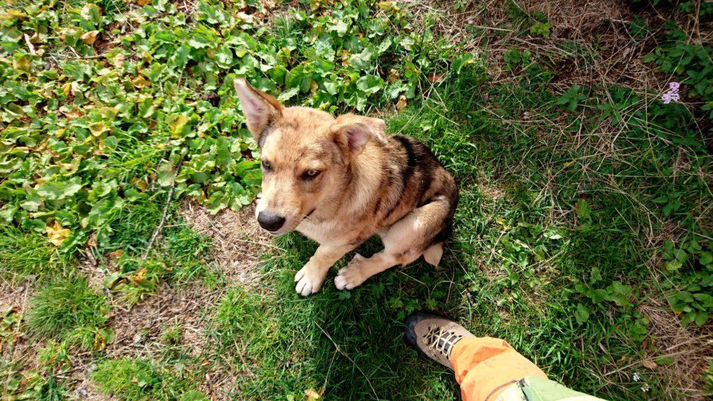 faccia da cane: il cucciolo, a giudicare dalle zampotte, crescerà parecchio