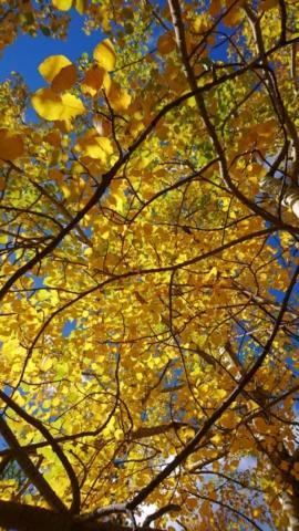oggi i colori sono abbaglianti e intensi. Adoro l'autunno!!!