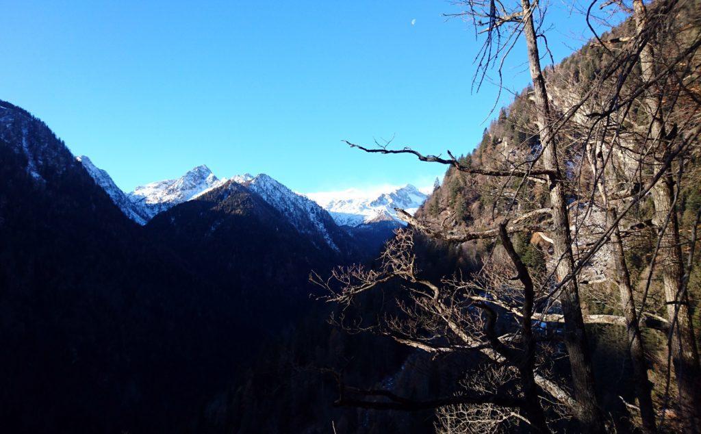Verso metà bosco si iniziano a vedere in lontananza il Monte Ospedale (punta di sinistra) e il Crozzon di Lares (punta di destra)