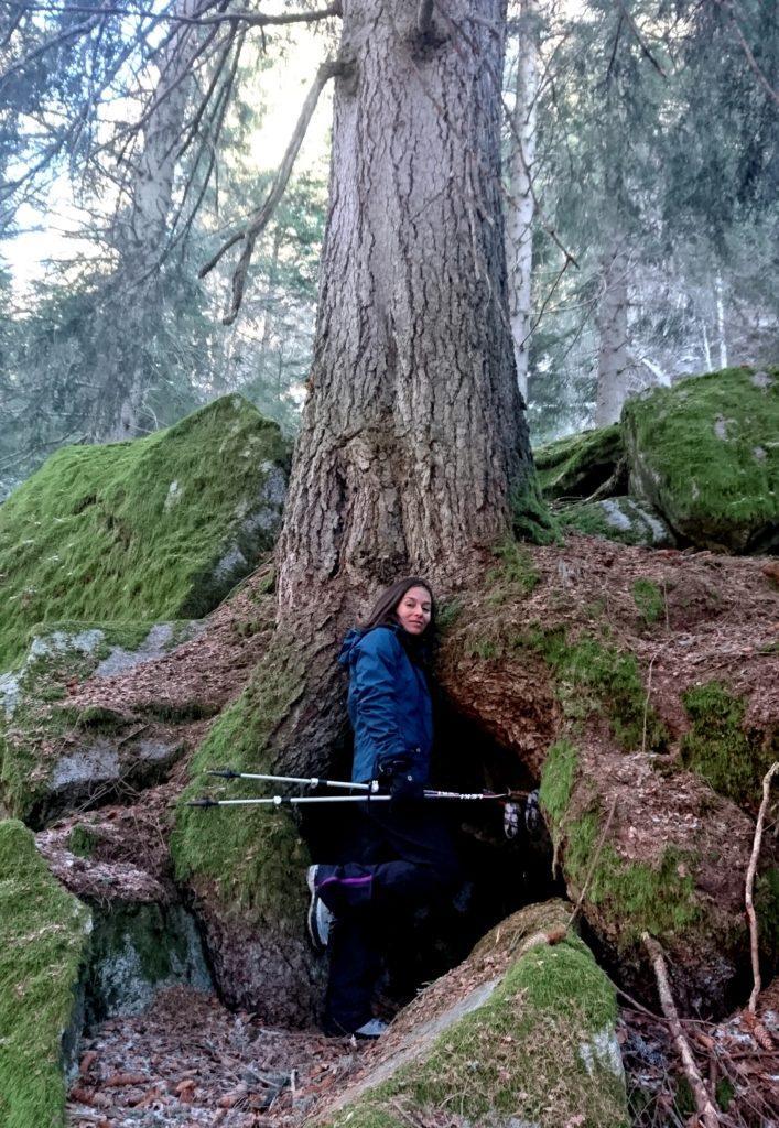 Questo bellissimo albero regala un perfetto riparo naturale in caso di maltempo