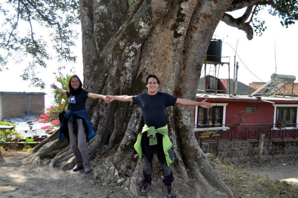 questo tipo di albero è sacro a Shiva e quindi se ne trovano di bellissimi e molto antichi