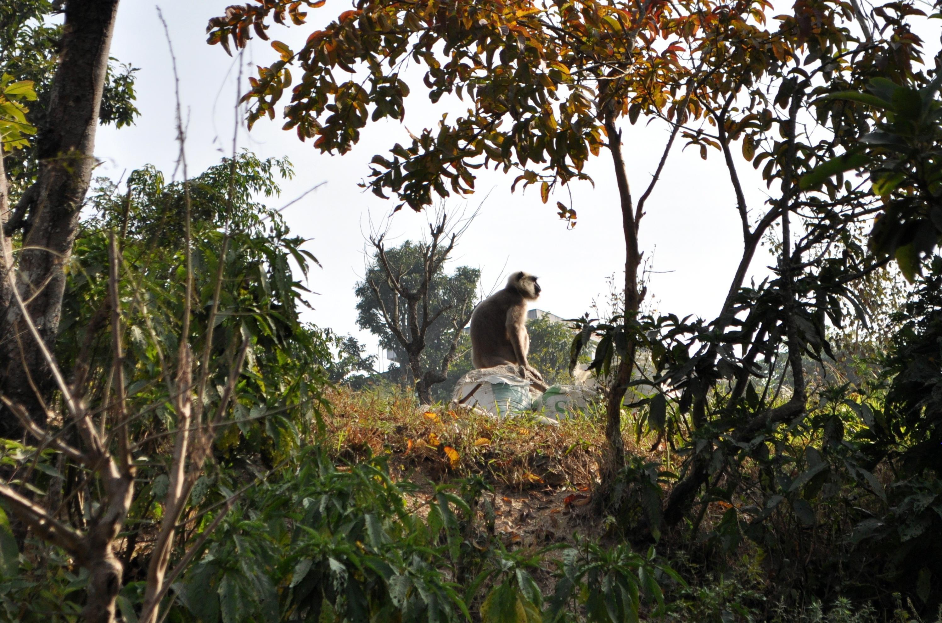lungo la strada vediamo la nostra prima scimmia. Ne vedremo moltissime altre più avanti, anche lungo il trekking