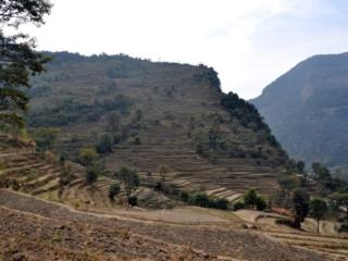 i bellissimi e tipici terrazzamenti dove si coltiva riso, lenticchie e fiore della senape