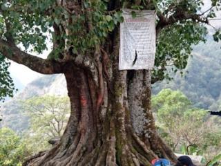 altro albero sacro lungo il percorso