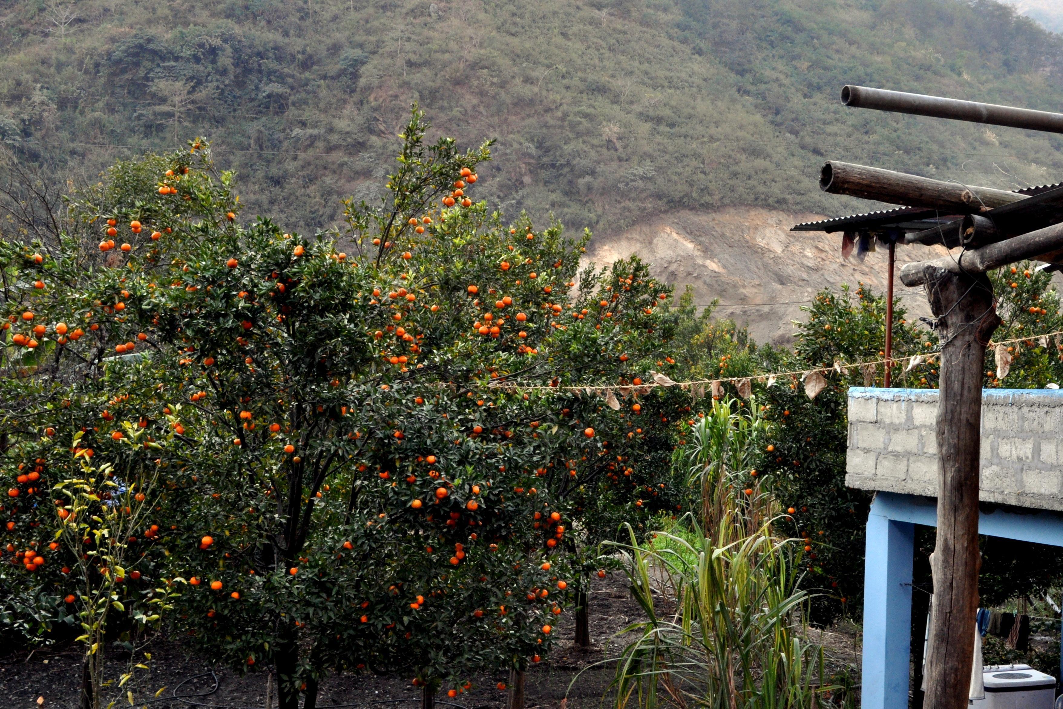 aranceti e alberi da frutto in generale qui di sicuro non mancano