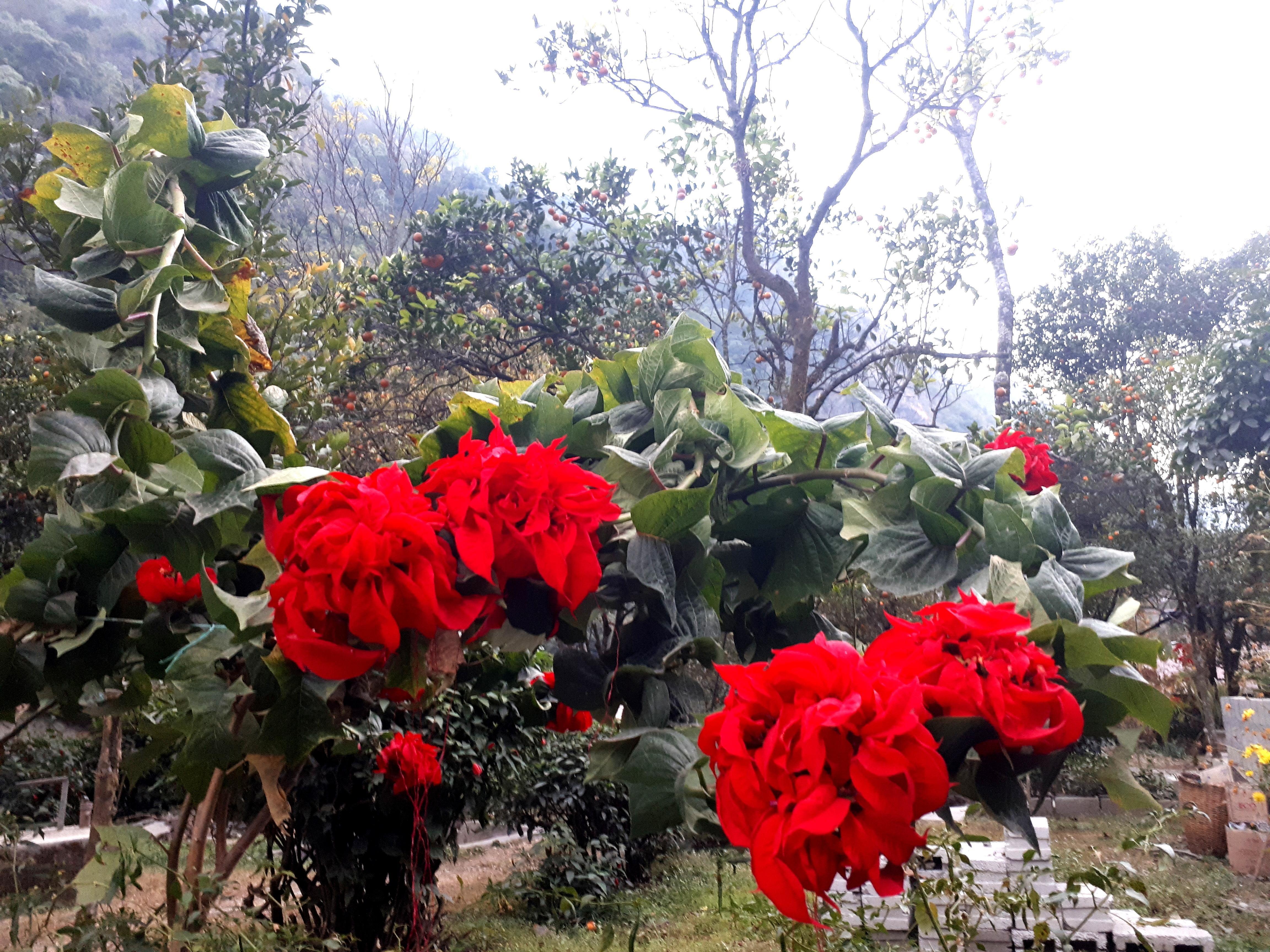 fiori tropicali nel giardino del nostro Lodge