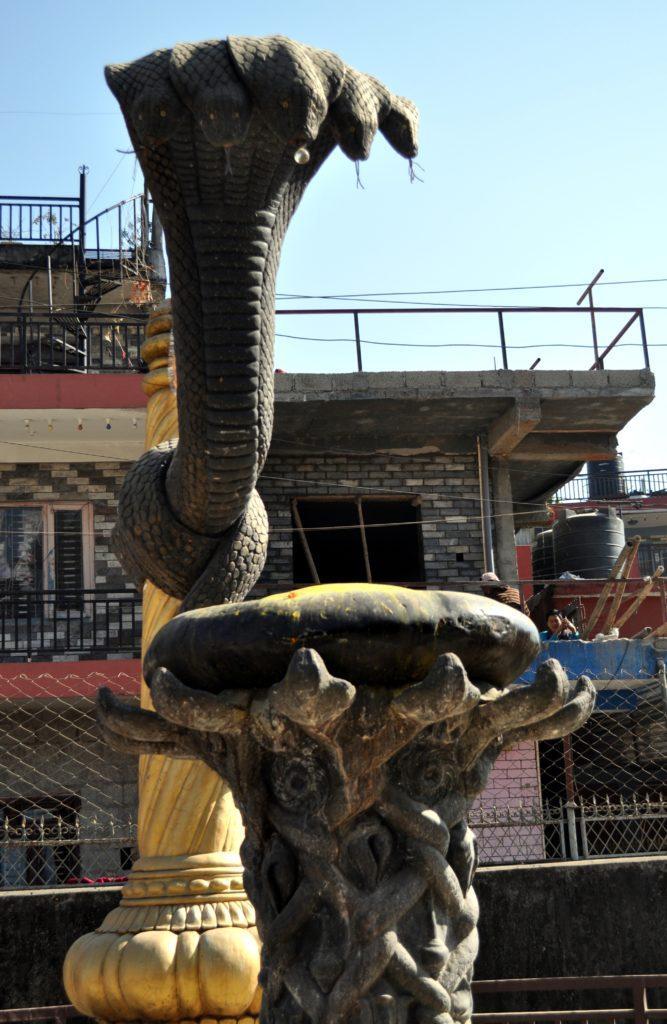 l'onnipresente cobra indù