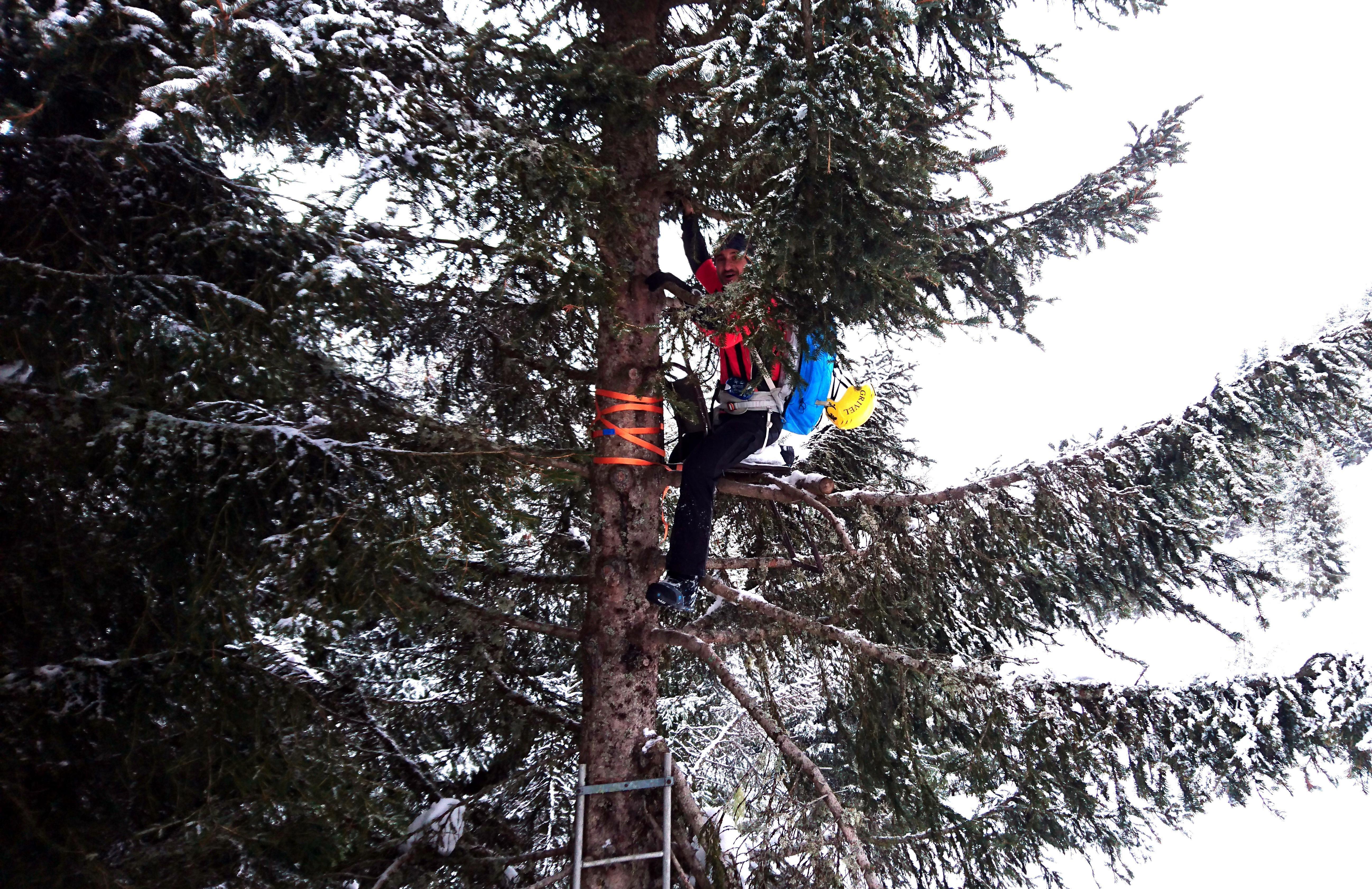 Troviamo una sedia per cacciatori su un albero e quel.....piccione del Gallo non può resistere nel salirci