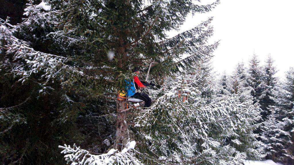 Eccolo lì....bello appollaiato sull'albero! Bella Galletto!
