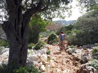 I meravigliosi alberi secolari che si incontrano lungo il sentiero