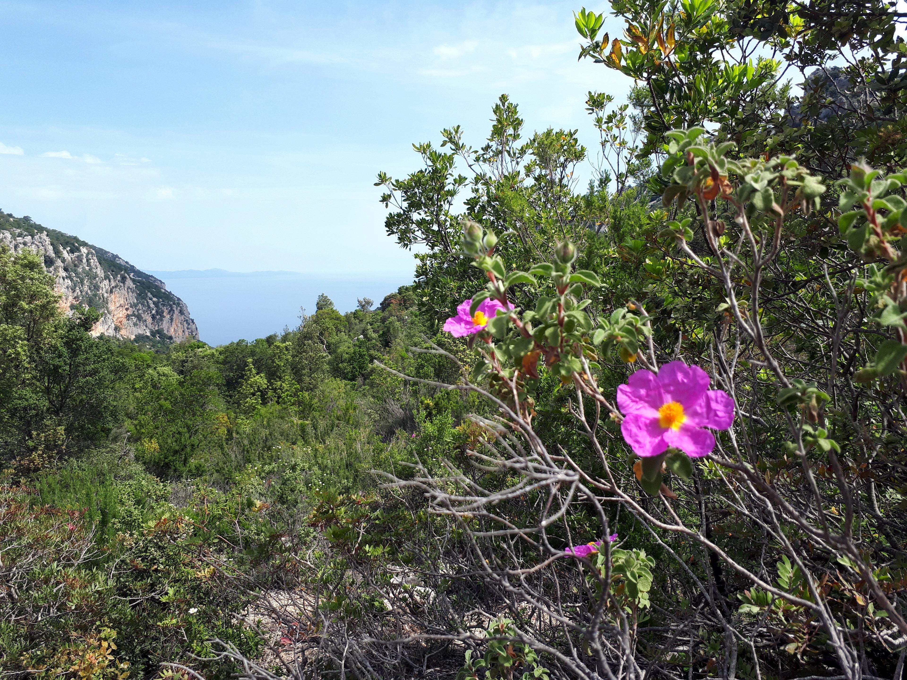 fioriture primaverili di Sardegna