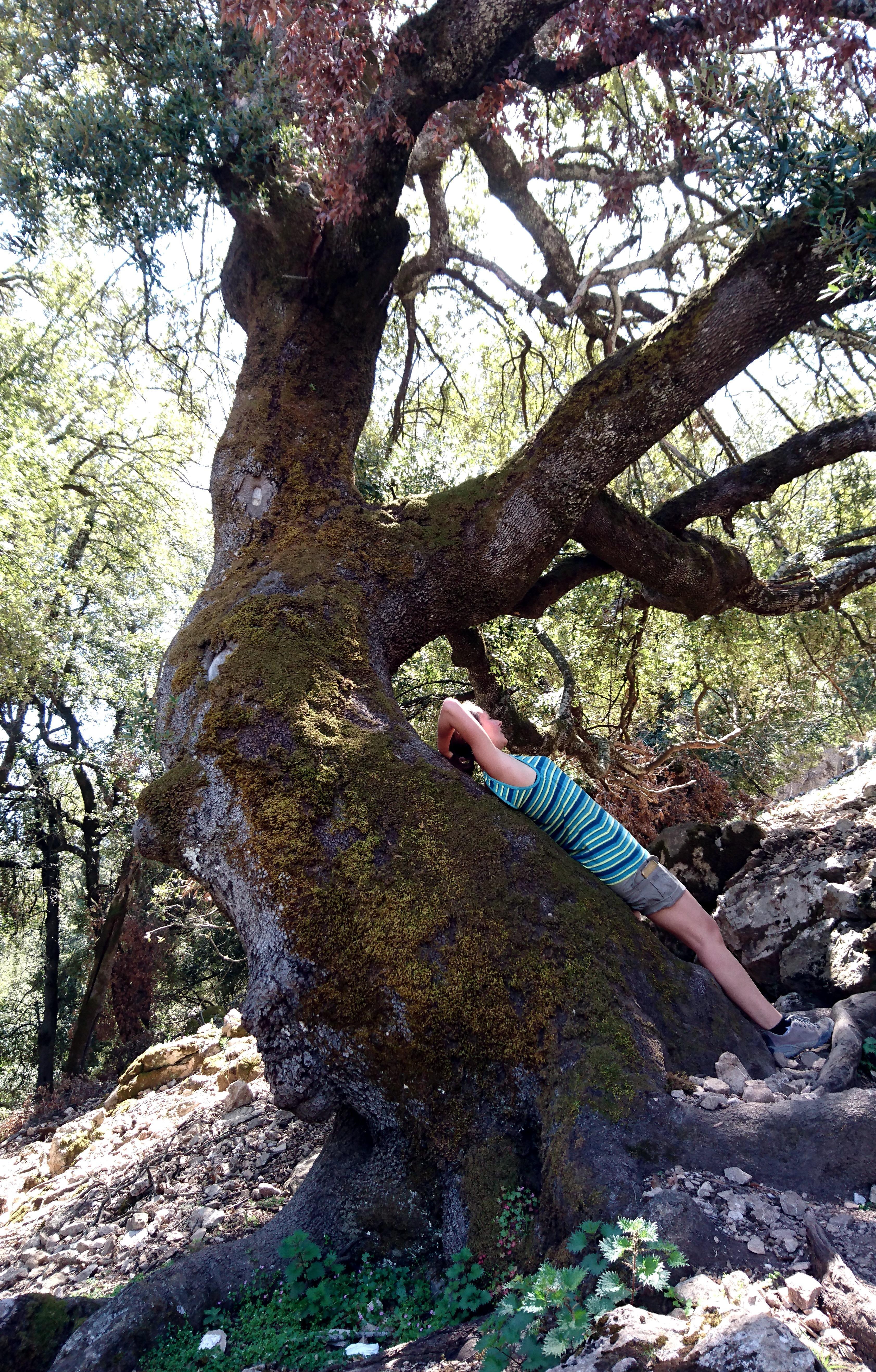 altro magnifico albero lungo il sentiero: sembra sia lì per offrire riparo e riposo