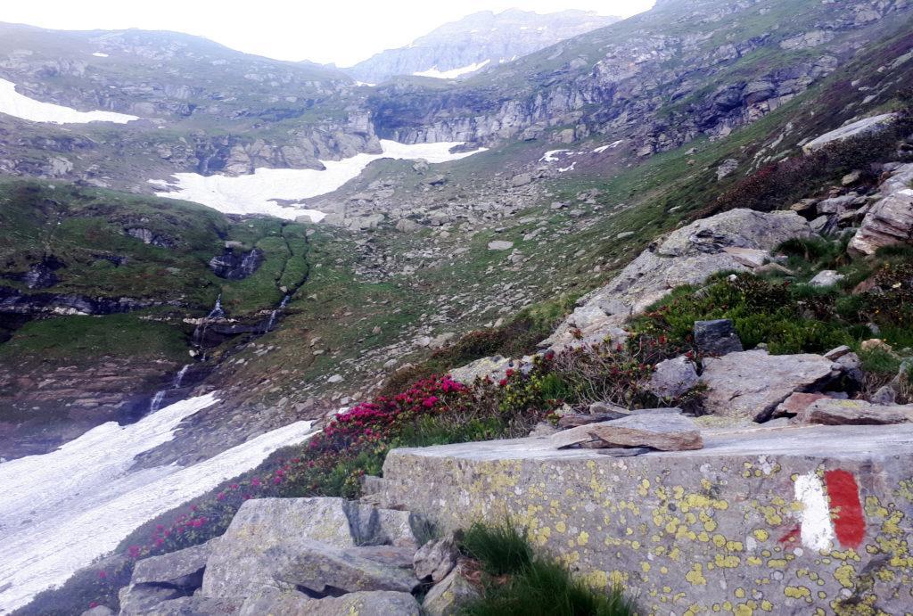 risaliamo tenendoci a destra (faccia a monte) rispetto ai risalti rocciosi che si vedono bene anche da Veglia: il sentiero qui è ben visibile