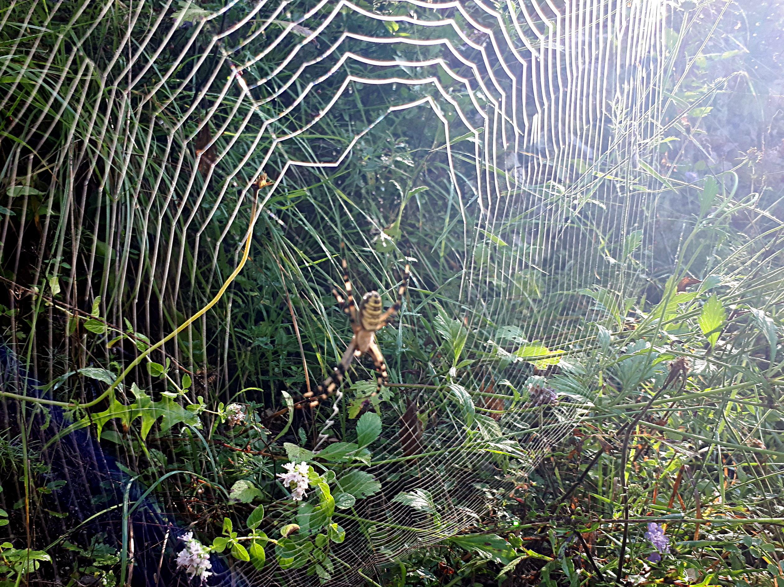 esemplare di ragno gigante nelle gole dell'Orfento