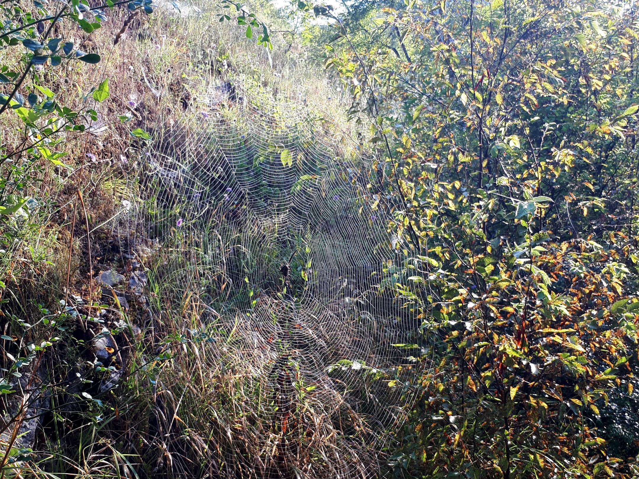 esemplare di ragno gigante nelle gole dell'Orfento: le ragnatele sono dei veri capolavori!