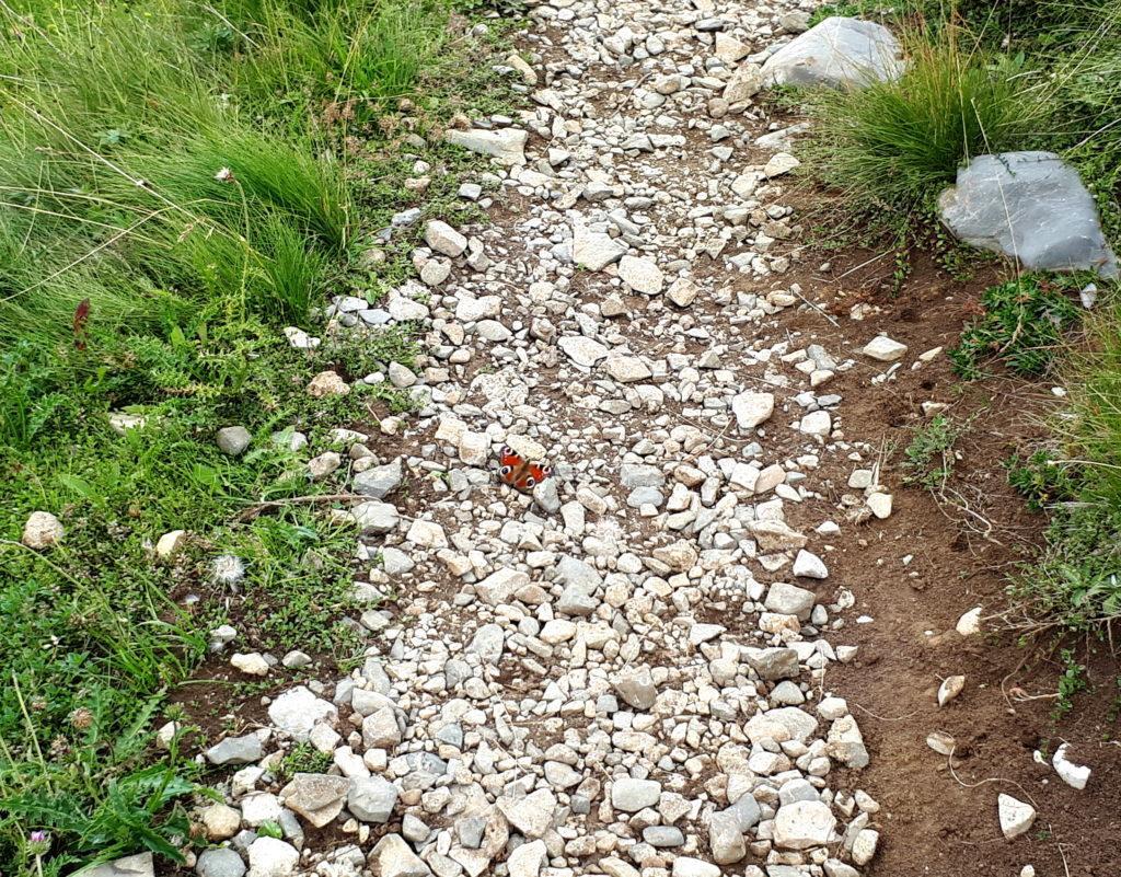 Una splendida farfalla lungo il sentiero di discesa