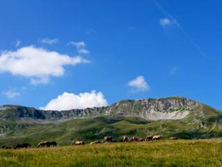 cavalli al pascolo a Campo Imperatore
