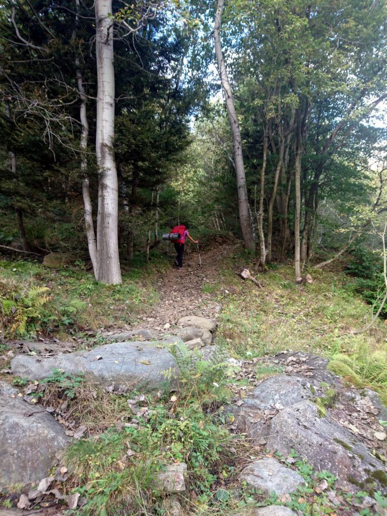 Imbocchiamo il sentiero nel bosco che conduce prima all'Alpe Drisoni e poi all'Alpe Nava