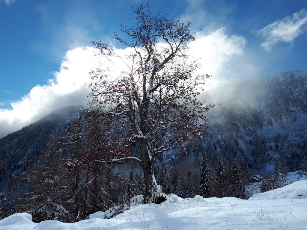 un albero bellissimo stagliato contro il sole