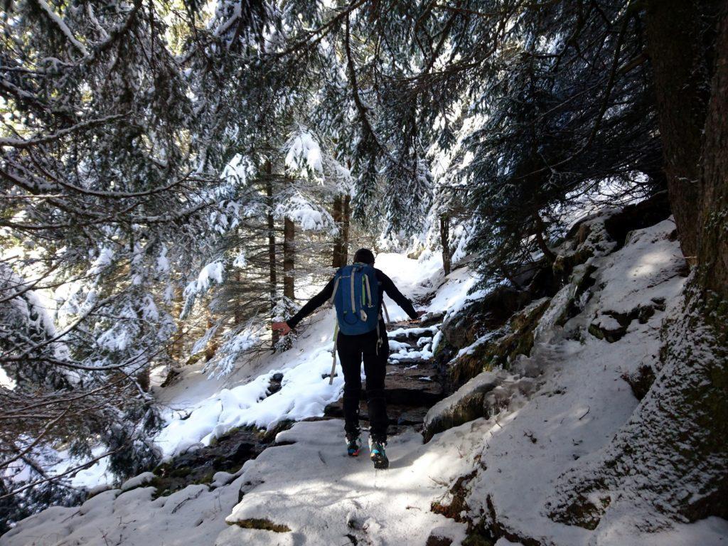 i tratti nei boschetti sono insidiosi: la neve lascia scoperti sotto gli alberi tratti ghiacciati, molto scivolosi