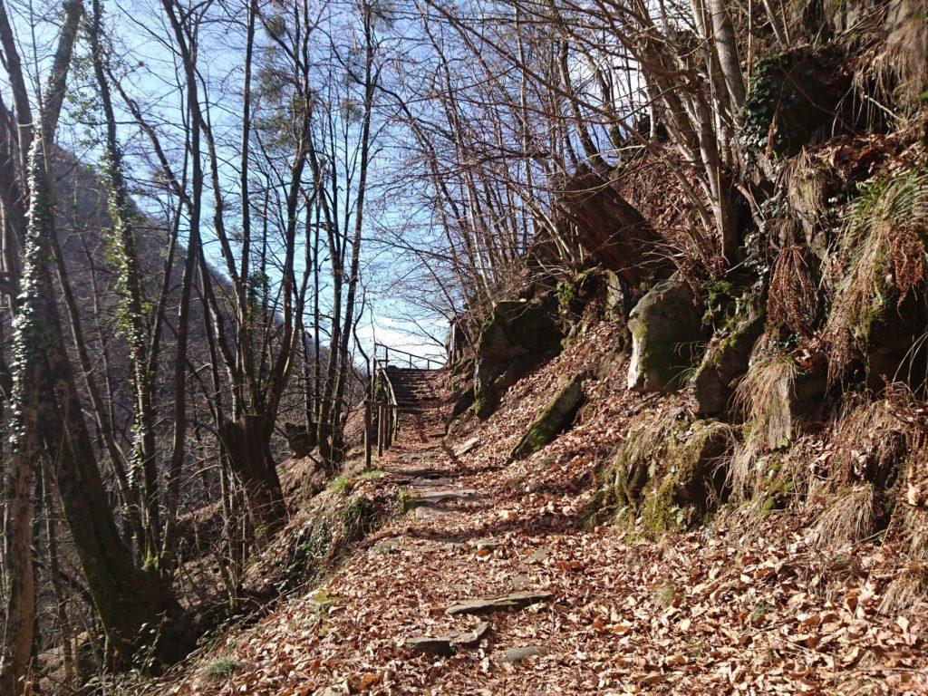 il sentiero sale dapprima nel bosco