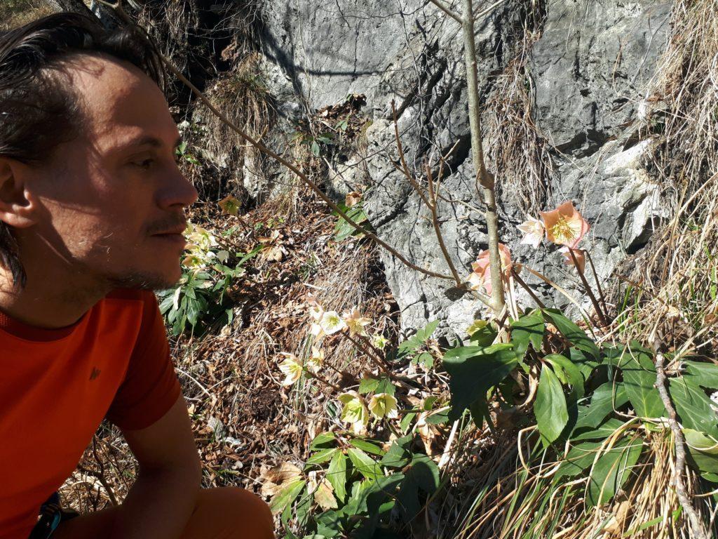 Gabriele e gli elleboro, magnifici nella loro fioritura tardo invernale