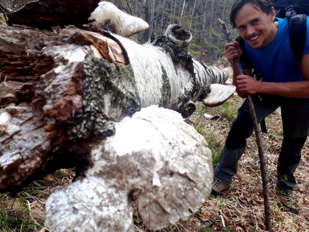 poco prima della discesa all'Arca, funghi lignicoli di notevoli dimensioni