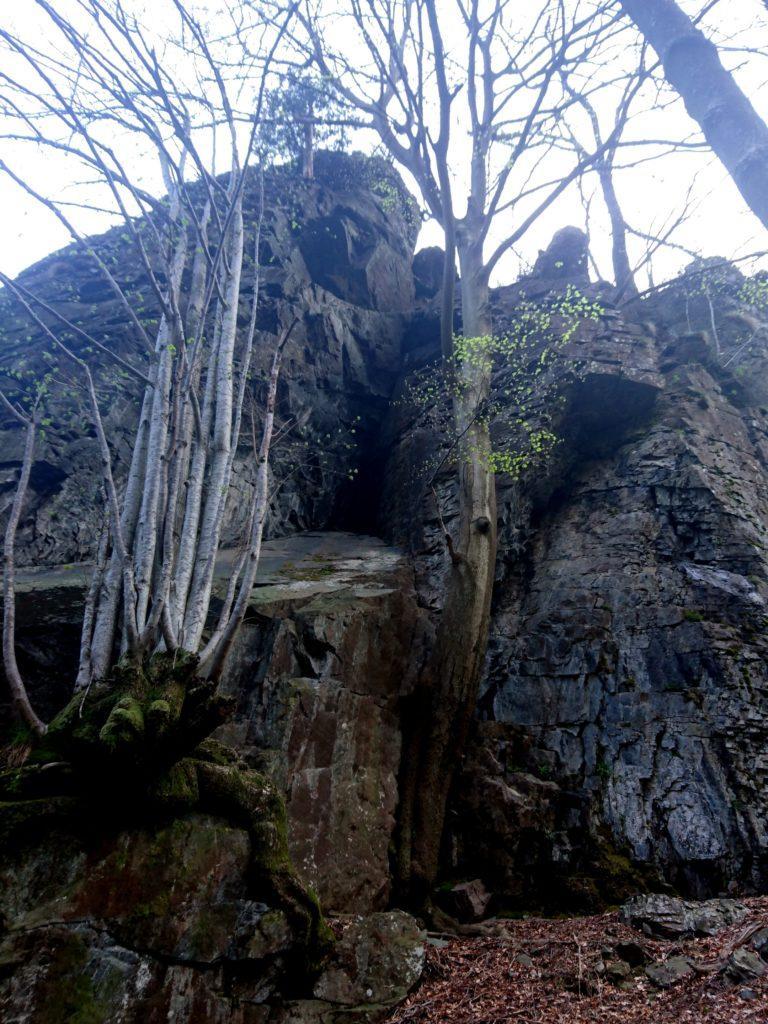 bellissimi alberi crescono adesi e sulle rocce soprastanti l'Arca