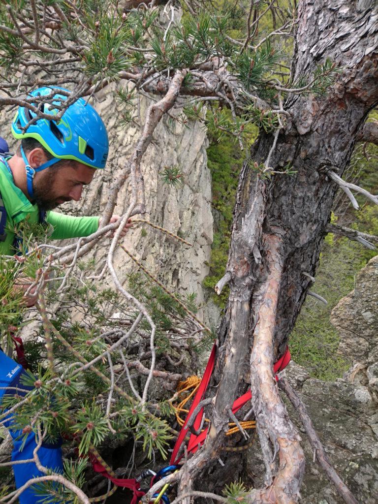Decidiamo di calarci dall'albero sulla cima. Il Niggah prepara la sosta di calata