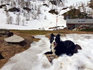 Zoe in posa (con il suo legnetto, che non molla!), dietro il Rifugio Gattascosa