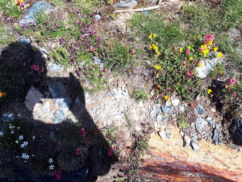 fiori variopinti per ogni dove