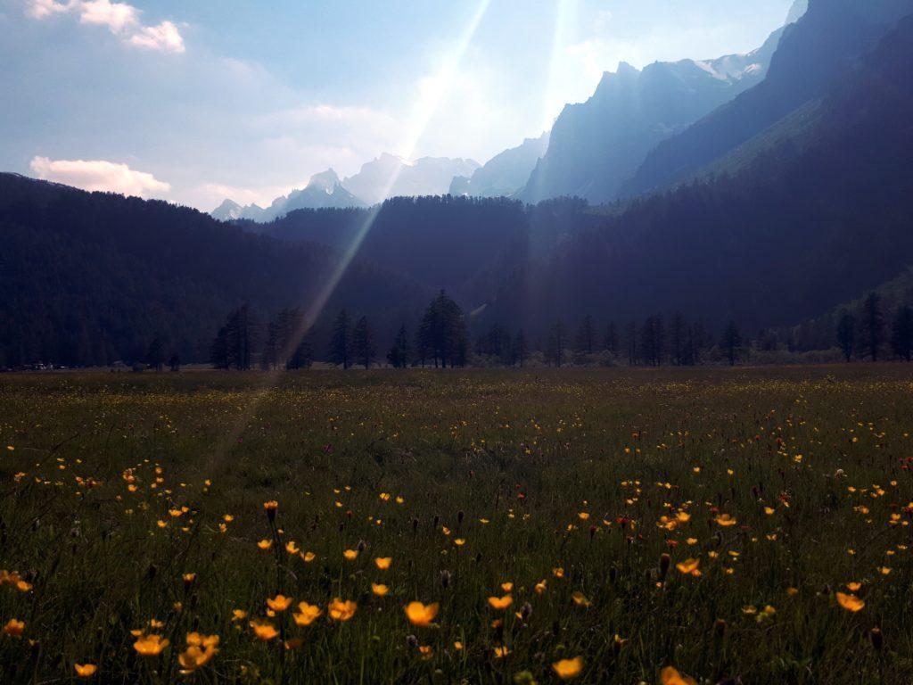 la giornata è magnifica: i ranuncoli occhieggiano a migliaia negli alpi pascoli