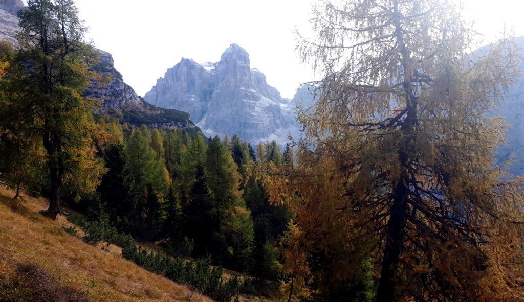 il bosco colorato d'autunno, con i larici dorati