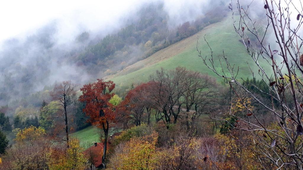 bellissimi i colori dei prati e degli alberi, quando le nuvole si aprono