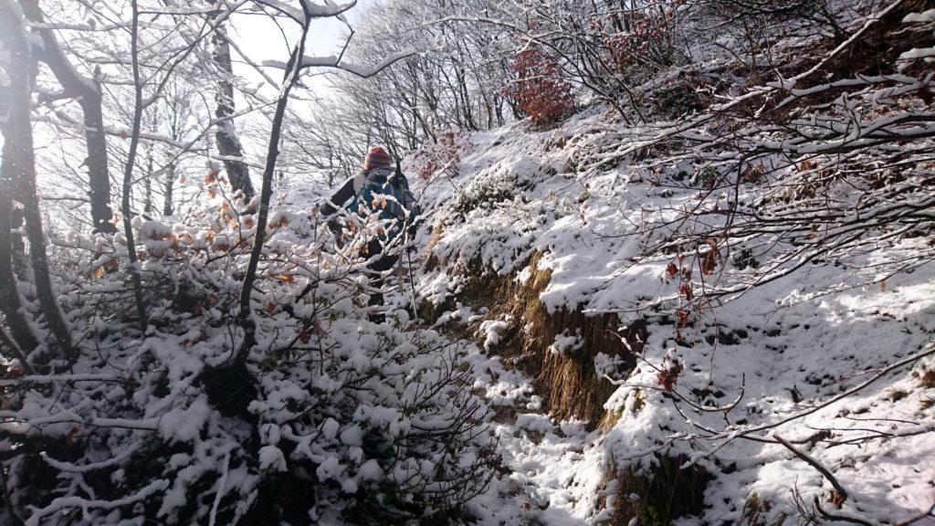 Superata la bocchetta di Desio ci inoltriamo in questo bel boschetto ricoperto da neve caduta ieri